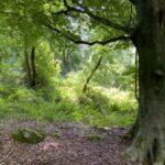 Woods 31